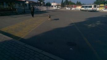 Sad dog approaches...